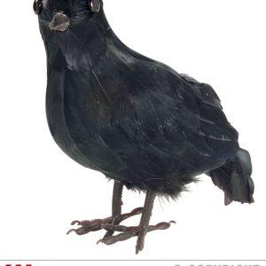 Corbeau plume