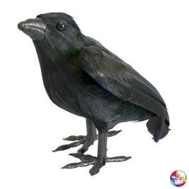 Corbeau plumes noires décoration